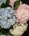 Hydrangeas by the bunch from Flowers by Ray and Sharon in Muskegon, MI