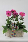 Dahlias in a double basket from Flowers by Ray and Sharon in Muskegon, MI