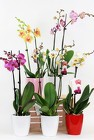 Orchid Plants from Flowers by Ray and Sharon in Muskegon, MI