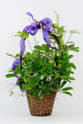 Plant in a Basket with Ribbons from Flowers by Ray and Sharon in Muskegon, MI