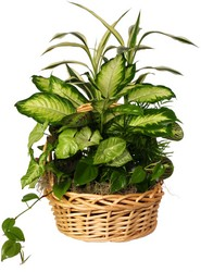 Planter in a Basket